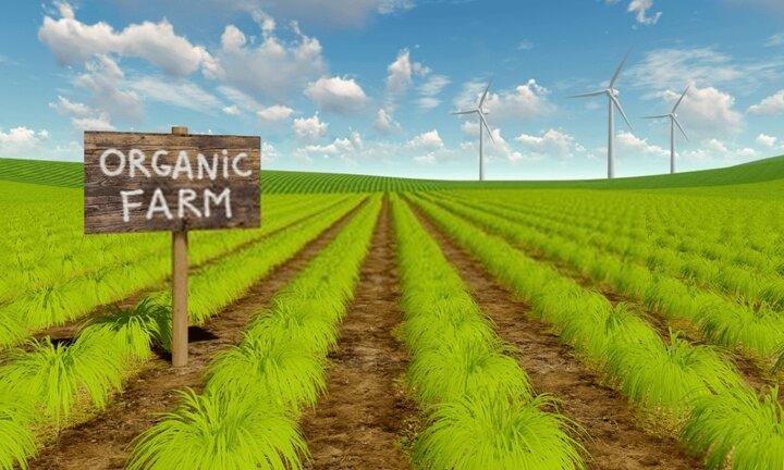 ضرورت برنامه ریزی برای کشاورزی ارگانیک/ تغییر نگرش در صنایع آرایشی از زیبایی به سلامت