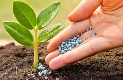 سرمایه صندوق حمایت از توسعه بخش کشاورزی استان سمنان افزایش مییابد