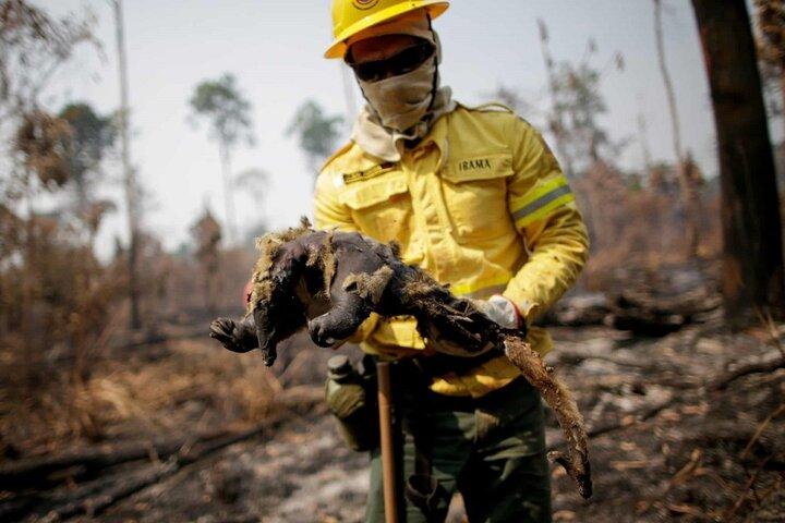 آتش سوزی آمازون 5