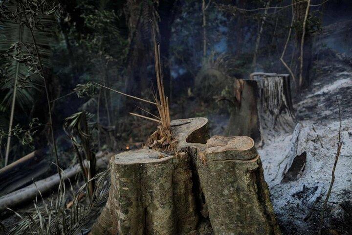 آتش سوزی آمازون 7