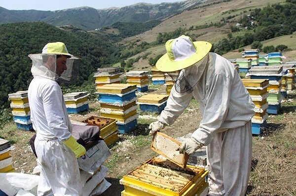 کرونا زنبورداری خراسان شمالی را هم بینصیب نگذاشت؛ سهمیه نادرست شکر
