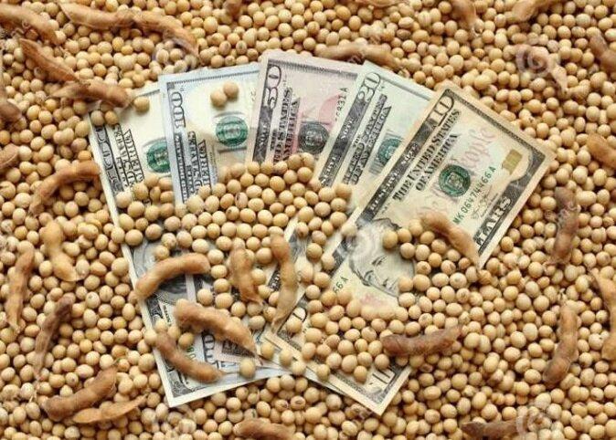 رشد ۴.۲ درصدی سالانه بازار  کنجاله سویا