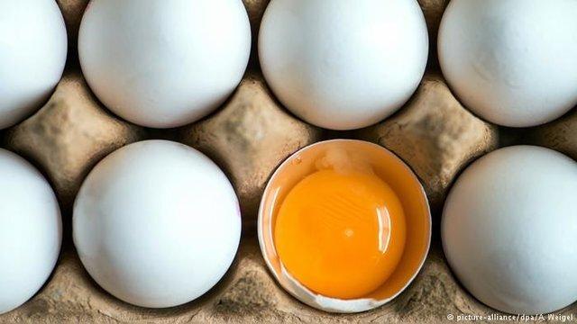 تخم مرغ مورد نیاز چهارمحال و بختیاری از دیگر استانها تامین میشود