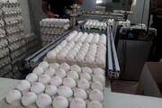 سرانه مصرف تخممرغ در خراسان شمالی ۳ برابر تولید است