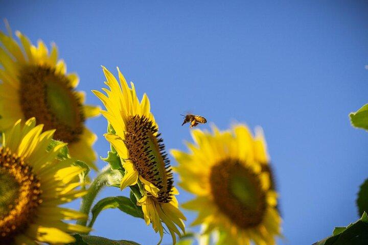 ورود زنبورهای رایحه یاب به صنعت کشاورزی جهان