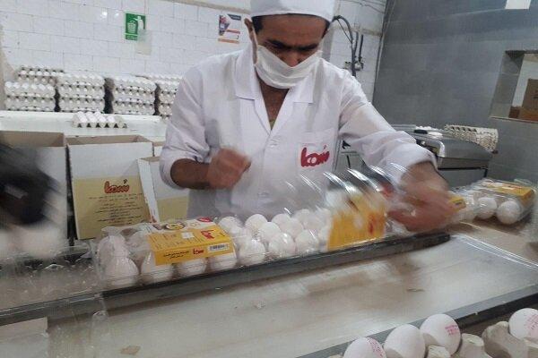 جایگاه هجدهم ایران در بازار جهانی تخم مرغ| تفاوت ۵ کیلویی سرانه مصرف در کشورهای پیشرفته و در حال توسعه