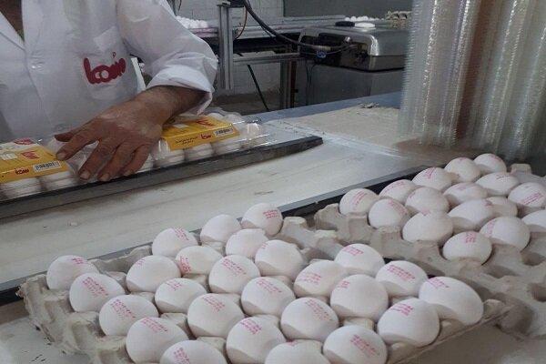قیمت تخم مرغ در بازار همدان روند کاهشی به خود گرفت