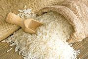 معاملات برنج امسال در بورس کالا قد میکشد