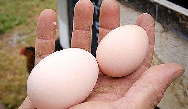 تخم مرغ مختار السلطنه ای یا سوپری؟ / داستان تخم مرغهایی که گرانی را می فهمند!