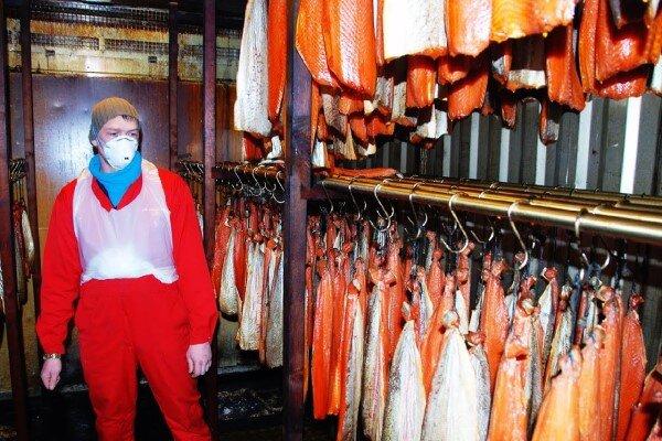 از صفر تا صد پرورش ماهی سالمون