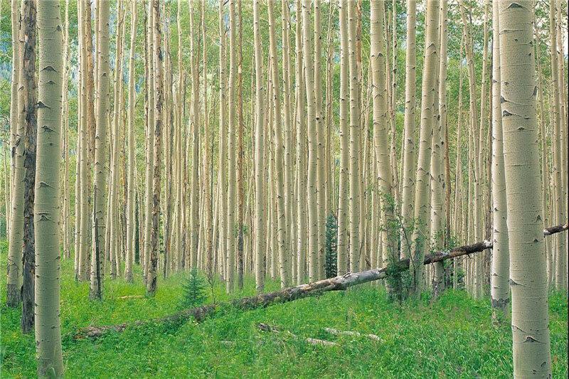 ۶ میلیون تن چوب در مازندران تولید میشود