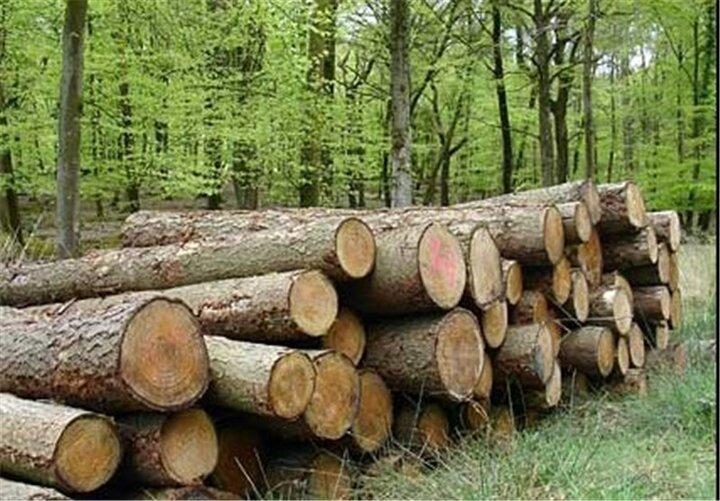 زراعت چوب در ۱۱۰۰ هکتار از اراضی آذربایجانشرقی انجام میشود