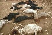 دامداران خراسان شمالی ۲۸۰ میلیون ریال بابت حمله وحوش غرامت گرفتند