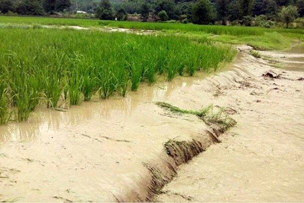 حوادث طبیعی ۱۰هزار و ۱۳ میلیارد به کشاورزان خراسان شمالی خسارت وارد کرد