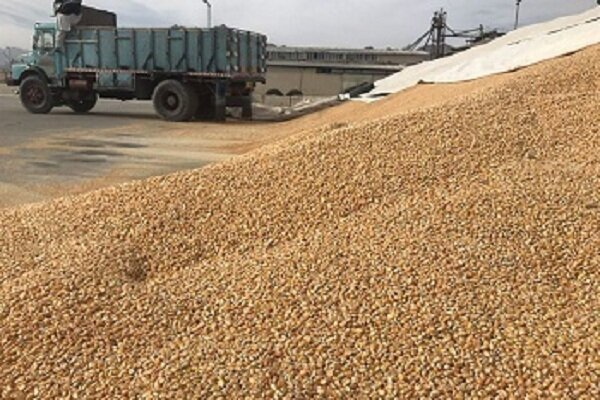 وزارت جهاد کشاورزی سیاست مدونی برای تولید نهادههای دامی ندارد