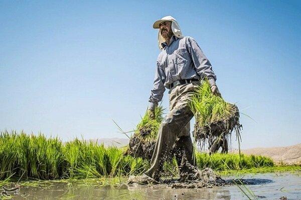 همنشینی برنج با پسته و زعفران؛ بازار بورس چلو میشود