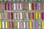دوازدهمین نمایشگاه گل های داوودی اصلاح شده کشور در محلات آغاز به کار کرد