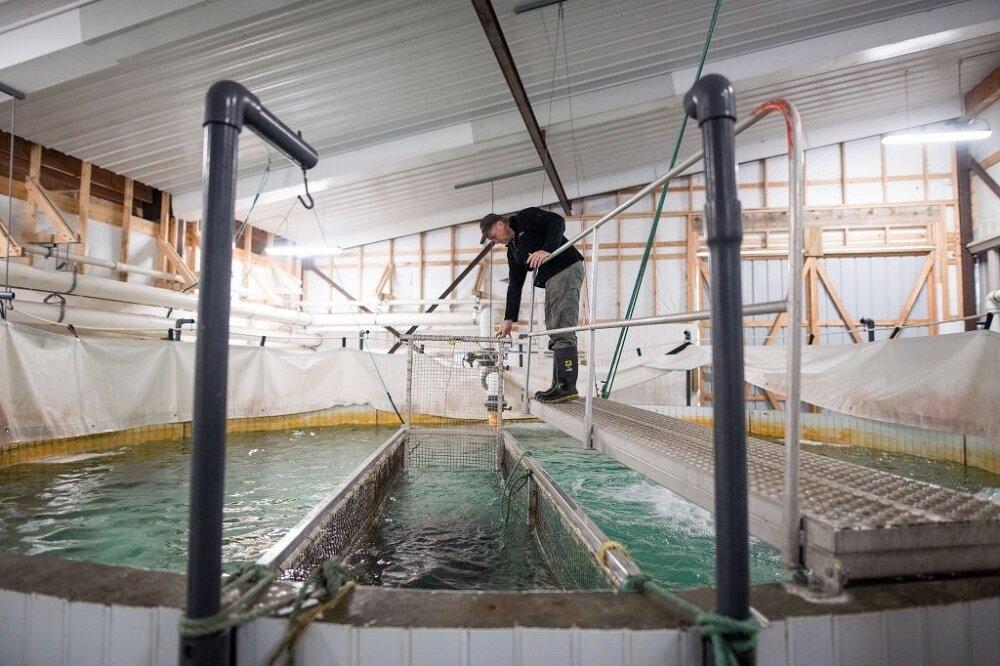 مزارع تخصصی پرورش ماهی در کانادا