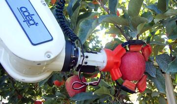 بالا بردن کیفیت سیب و فروش با قیمت بالاتر با استفاده از فناوری های نوین