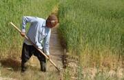 مهلت بیمه کشاورزی تا پایان دی تمدید شد/ پرداخت ۳۵ میلیارد خسارت به مرغداران