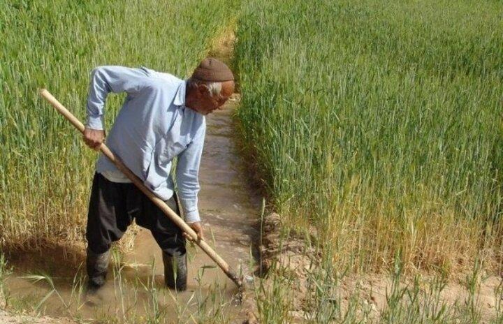 سود اصلی دسترنج کشاورزان را دلال ها و واسطه ها به جیب می زنند