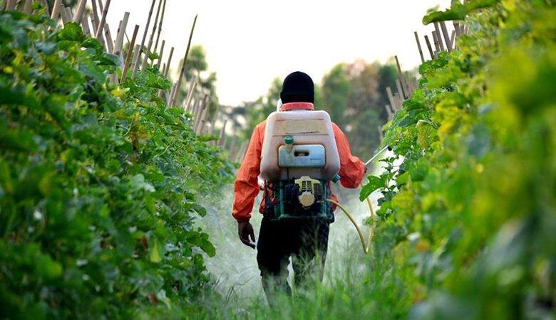 ۸۲ درصد تعهدات اشتغال قزوین در بخش کشاورزی محقق شد