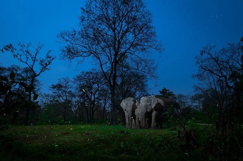 برندگان مسابقه عکاسی تمرکز در طبیعت