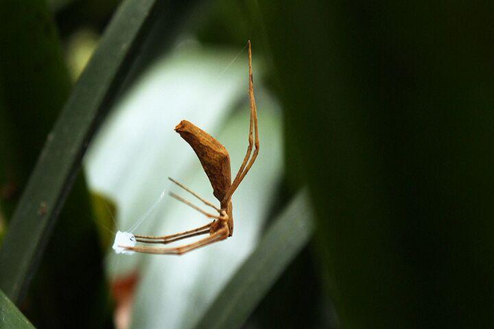 عنکبوت 4