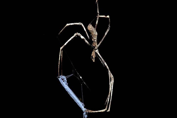 عنکبوت 5