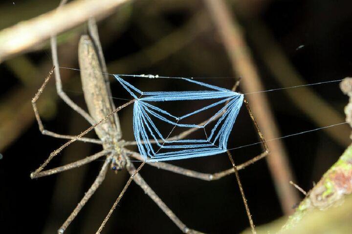 عنکبوت 7