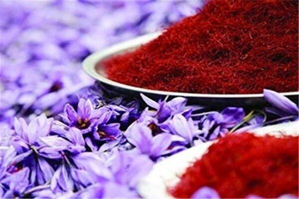زمین های اردبیل مستعد کشت زعفران؛ هدف ما رقابت با زعفران تولید شده در افغانستان است