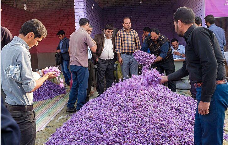 زعفران کاران در دوراهی فروش محصول؛ خرید تضمینی خوب یا بد
