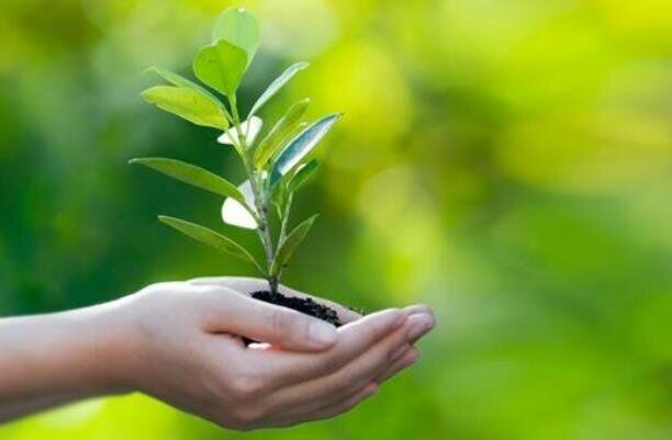 موافقت مجلس با لایحه موافقت نامه ایران و صربستان در زمینه حفظ نباتات
