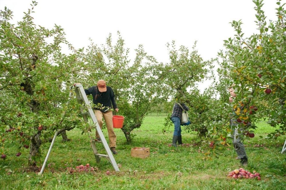 هشدار جهاد کشاورزی آذربایجانشرقی مبنی بر برودت هوا و خسارت به محصولات