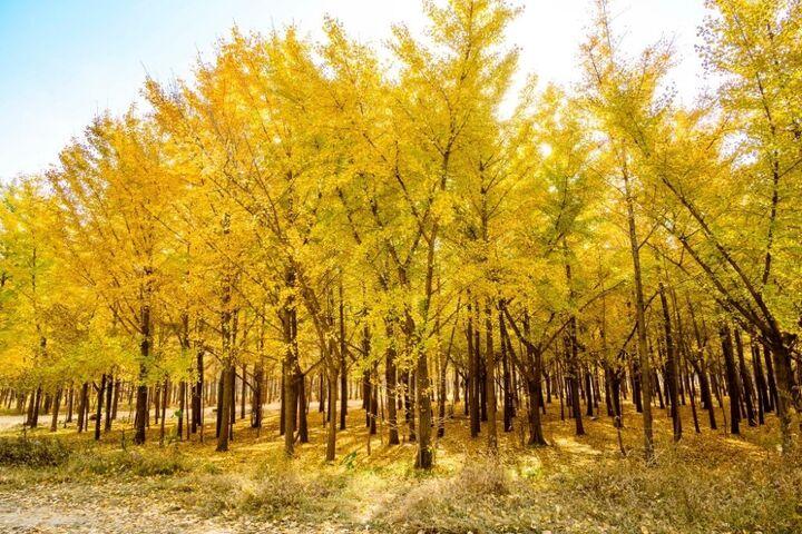 پاییز در چین 10