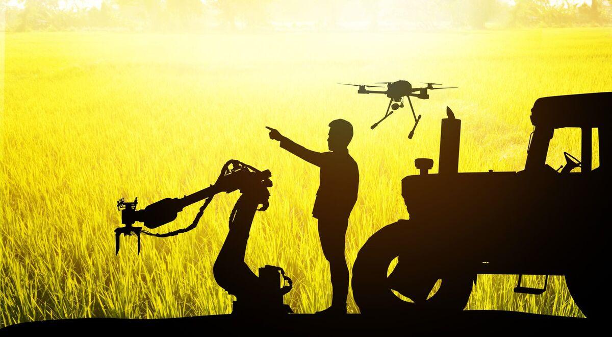 مقاوم سازی مزارع کشاورزی در برابر چالش ها با هوش مصنوعی