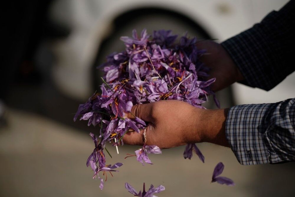 زعفران ایرانی به دنبال فرصتهای بهتر برای صادرات