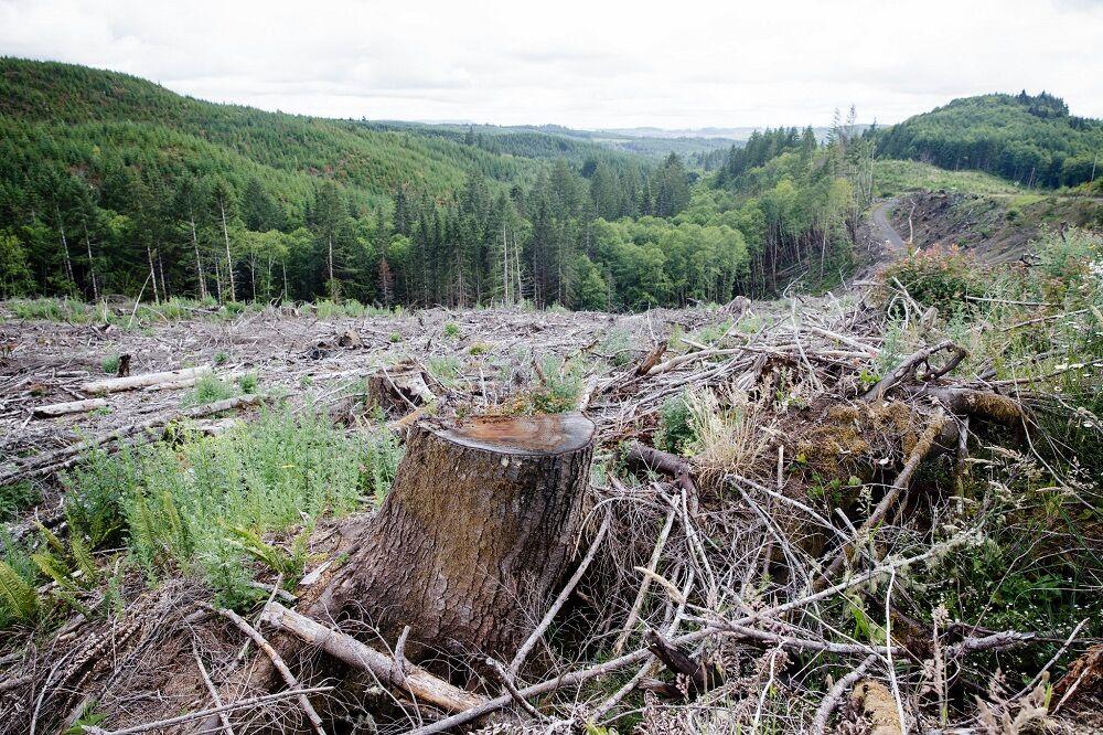 ویلاسازی قطعات جنگلی مازندران را تهدید می کند