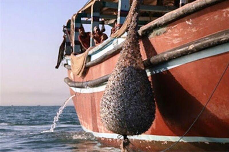 ورود سالانه ۲ هزار و ۵۰۰ قایق غیر مجاز به صیدگاههای خوزستان