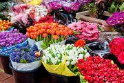 درآمد صادرات ۱۲۰ شاخه گل معادل یک بشکه نفت| ایجاد ۴۸ هزار هکتار گلخانه در کشور