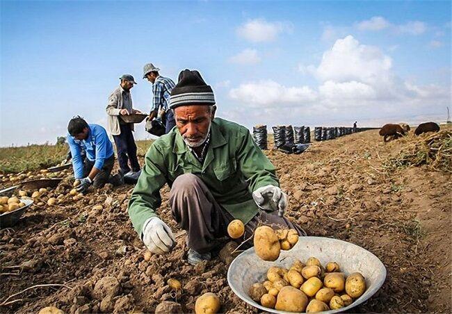 صادرات سیبزمینی به عراق از ۲۶ آبان ماه آزاد خواهد شد