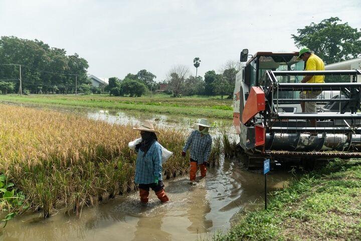 برنج تایلند 5