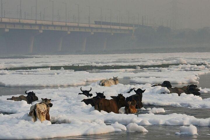 آلودگی رودخانه 10
