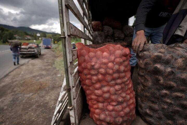 سیب زمینی کلمبیا 10