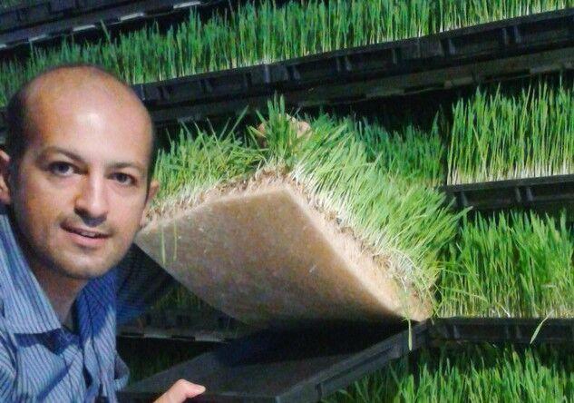 کشت هیدروپونیک ۳ تا ۵ برابر کشت خاکی محصول می دهد