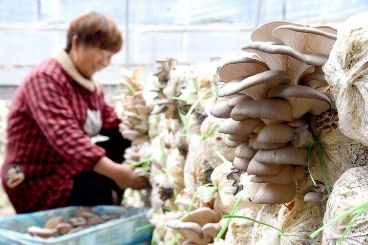 پرورش قارچ 3