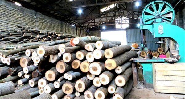 قیمت چوب وارداتی ۳۰ برابر شده است/ کمبود منابع مالی و مواد اولیه صادرات مصنوعات چوبی را کم کرد