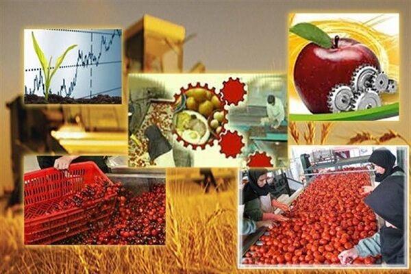جای خالی «صنایع تبدیلی» در کشاورزی ایلام/ ظرفیتهایی که هنوز شکوفا نشده است