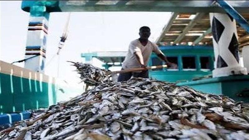 ۲۹۳ تن انواع ماهی قاچاق در آبهای هرمزگان کشف شد