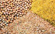 تولید خوراک آبزیان در چهارمحال و بختیاری افزایش یافت/ صادرات۴ هزار تن